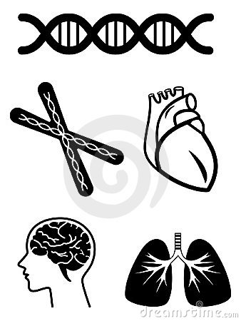 Medical symbols of organ