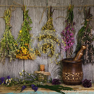 Free Medicinal Herbs Royalty Free Stock Photos - 120588418