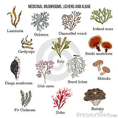 Free Medicinal Mushrooms, Lichens And Seaweeds Stock Image - 106433811