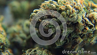 Medische Marihuana 3 stock footage