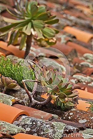 Mediterranean house roof