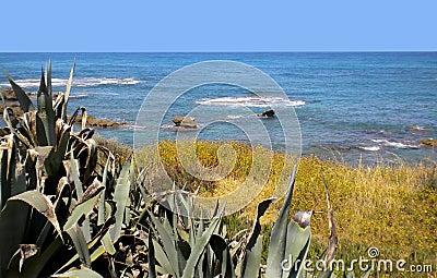 Mediterranean shoreline with vegetation.