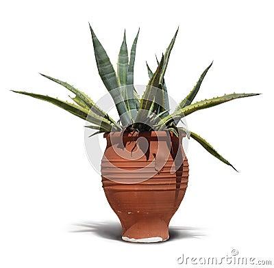 Mediterranean terracotta cactus pot
