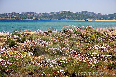 Mediterranean vegetation