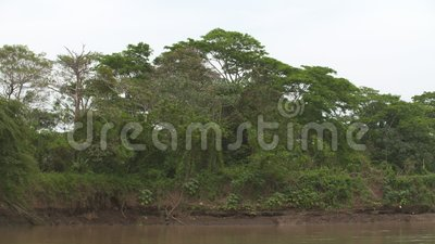 River Bank Erosion and Silting, Casanare, Colombia. Medium low angle tilting shot of plain river bank soil erosion impacts, surrounding tropical trees, and stock video footage