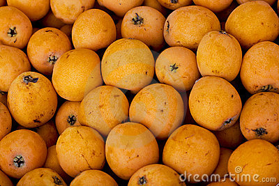 Medlar background