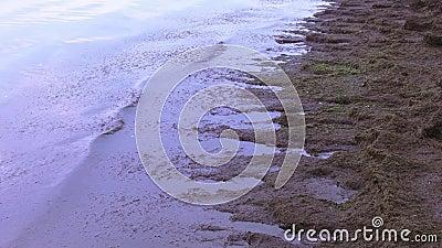 Meerespflanzen auf dem Ufer des Meeres stock video
