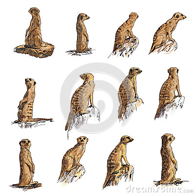Free Meerkat Stock Image - 30151121