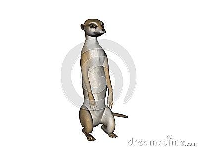 Meerkat illustration