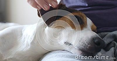 Meisje die zacht zijn hond petting stock footage