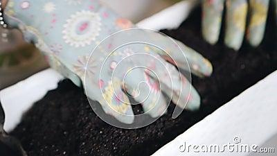 Meisjespasteuze grond voor bloemen in een lange verpakking Verzorging van bloemen Gardening stock video