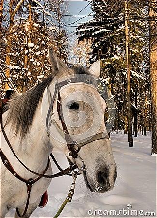 Melancholy horse