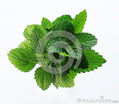 Melissa herb