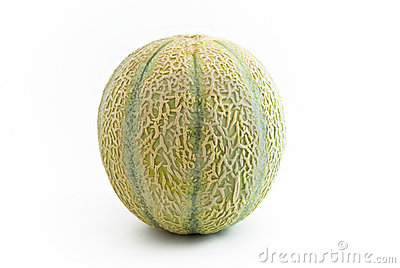 Melon Fruit upright