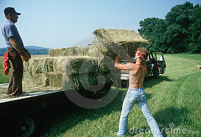 Men loading hay bales on truck Editorial Photo