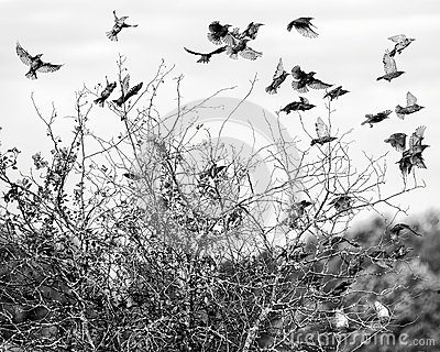 Menge der Vögel im Flug