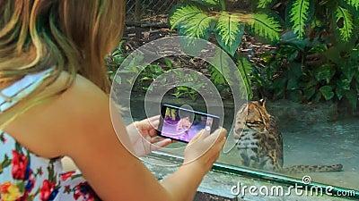 A menina loura da parte traseira toma a foto do gato selvagem na janela do jardim zoológico vídeos de arquivo