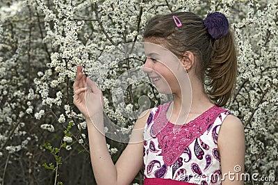Menina que olha e que toca nas flores brancas