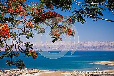 Mening van het Dode Overzees, Israël