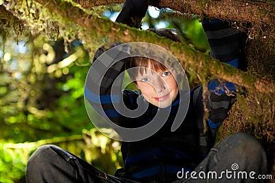 Menino novo que senta-se em um sorriso da árvore