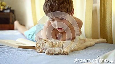 Menino pára de ler e começa a acariciar a gengibre-dormente gatinha-de-dobra escocesa filme
