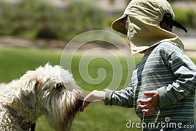 Menino que alimenta seu cão