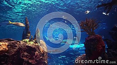 meno för lombok för giliindonesia ö nära den undervattens- världen för havssköldpadda lager videofilmer