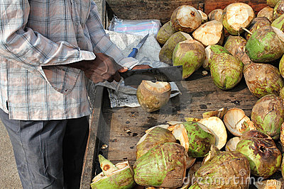 Mens die Kokosnoot voorbereidt