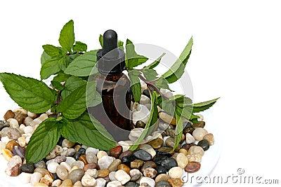Menta peperita Aromatherapy