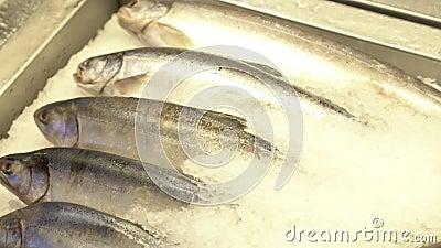 Mentiras dos peixes frescos no gelo loja filme