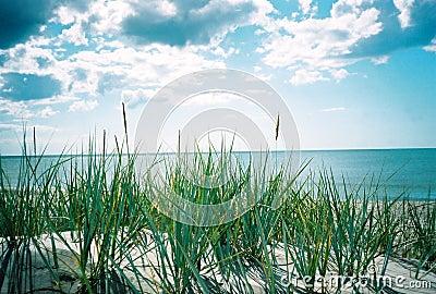 Mer d été. Une vue du sandhill