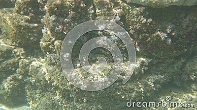 Mergulho perto de belos penhascos, flora submarina e fauna em água cristalina filme