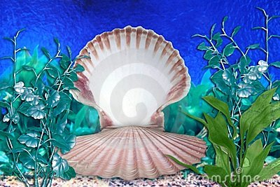 Mermaid Aquarium Sea Shell Scene
