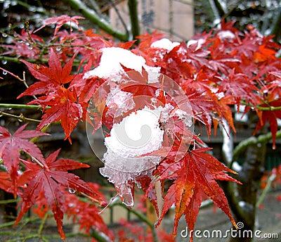 Mescolamento di stagioni
