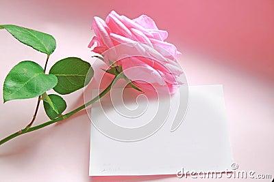 Messaggio di rosa di colore rosa