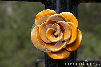 Metal a Rose
