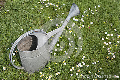 Metal watering can on lawn in spring garden