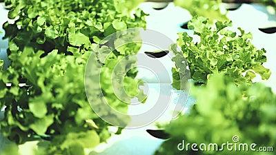 Metodo di coltura idroponica di coltura delle piante in acqua senza suolo archivi video