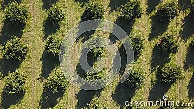 Metragem aérea de um bosque alaranjado na mola vídeos de arquivo
