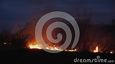 Mettez le feu ? l'herbe et aux arbres br?lants au cr?puscule banque de vidéos