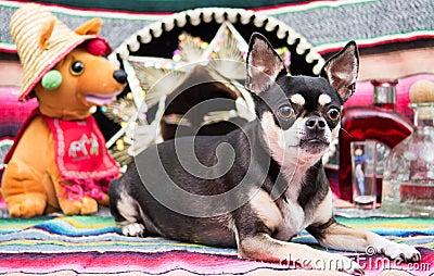 Mexican Cinco De Mayo Dog