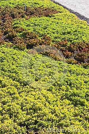 Mexican garden texture II