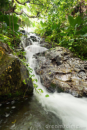 Mexican jungle cascades