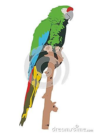 Mexican military macaw (Ara militaris mexicana)
