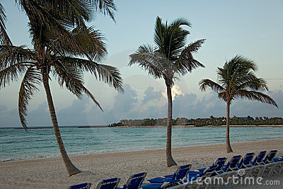 Mexico beach morning palms