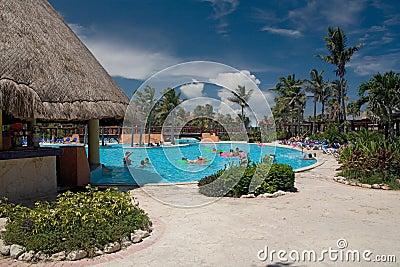 Mexico pool palms