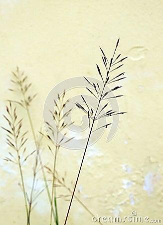 Miłości trawy zakończenie w górę makro-