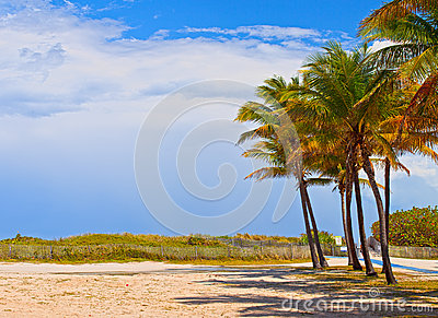 Miami Beach Florida, palm trees on a beautiful summer day