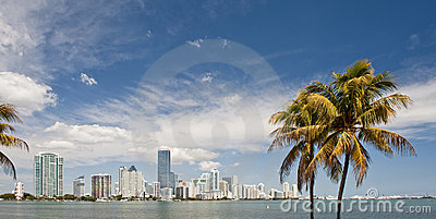 Miami skyline and palms