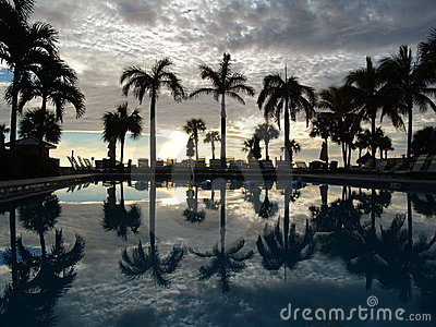 Palm trees reflecting on swimming pool